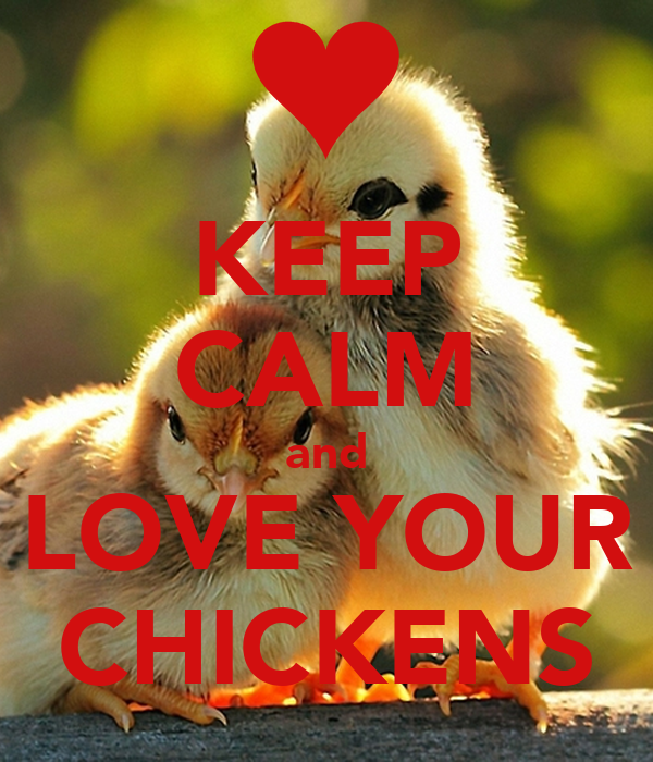 KEEP CALM and LOVE YOUR CHICKENS