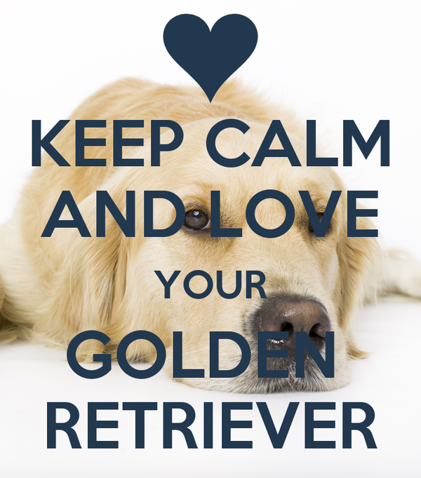 KEEP CALM AND LOVE YOUR GOLDEN  RETRIEVER