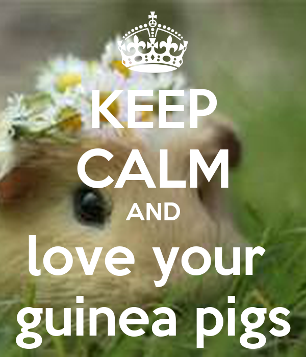 KEEP CALM AND love your  guinea pigs