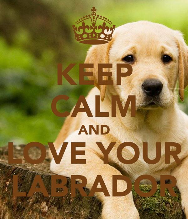 KEEP CALM AND LOVE YOUR LABRADOR