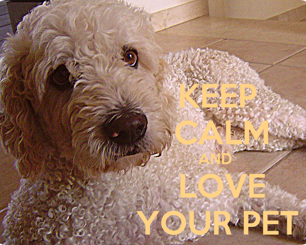 KEEP                CALM                              AND                LOVE               YOUR PET