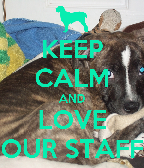 KEEP CALM AND LOVE YOUR STAFFY