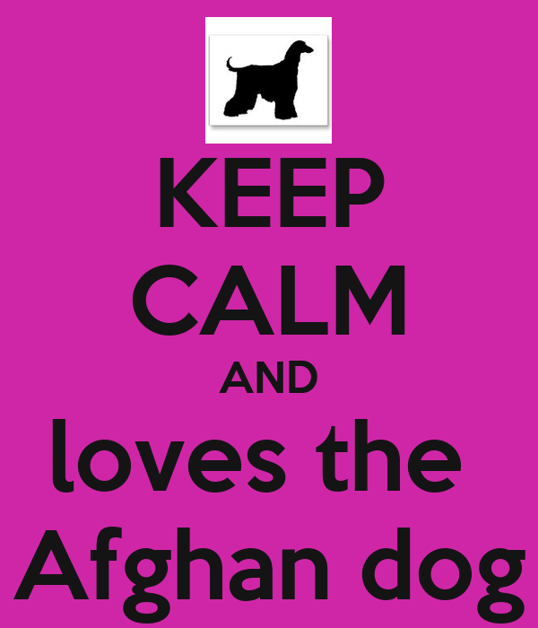 KEEP CALM AND loves the  Afghan dog
