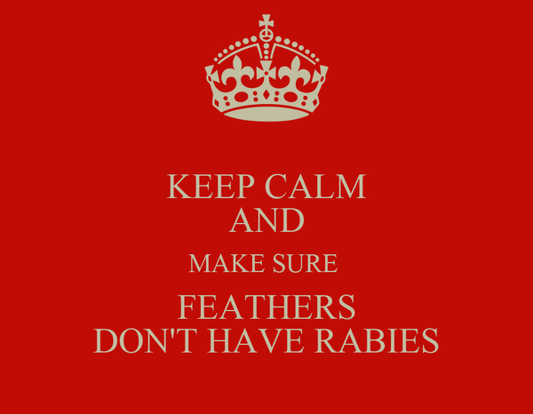KEEP CALM AND MAKE SURE  FEATHERS DON'T HAVE RABIES