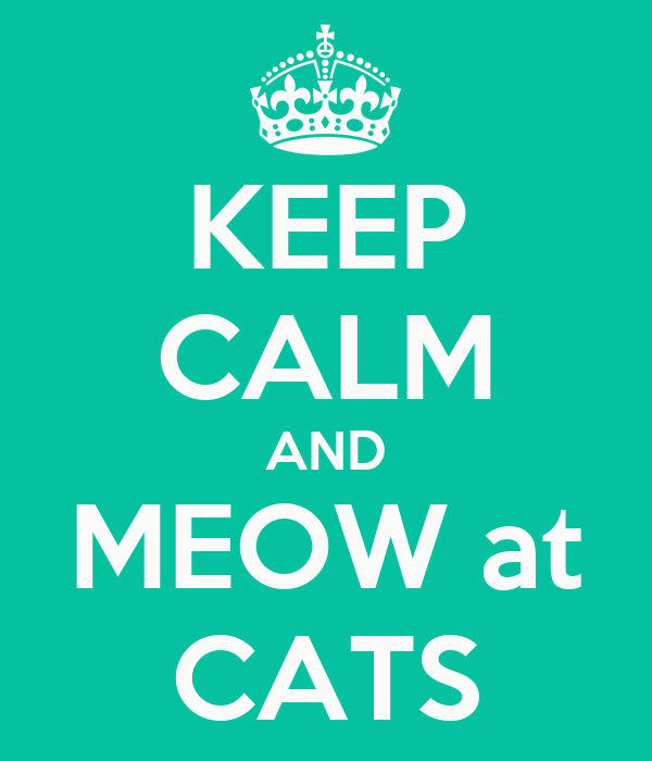 KEEP CALM AND MEOW at CATS