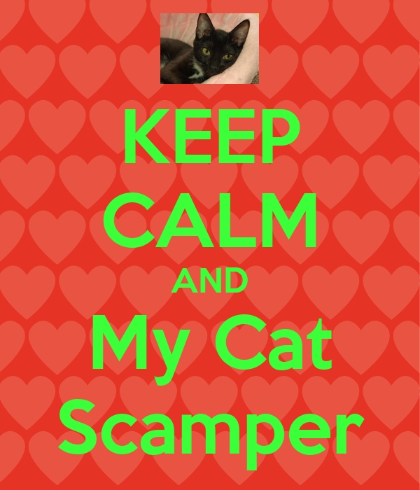KEEP CALM AND My Cat Scamper