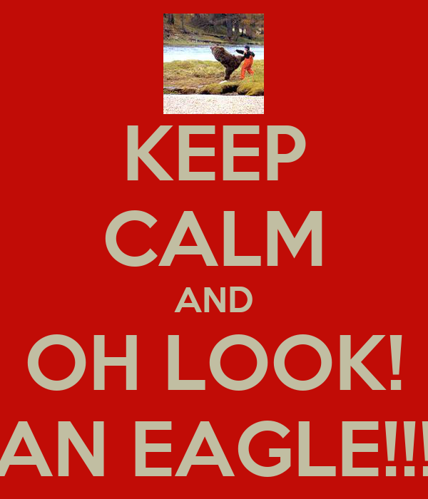KEEP CALM AND OH LOOK! AN EAGLE!!!