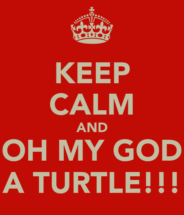 KEEP CALM AND OH MY GOD A TURTLE!!!