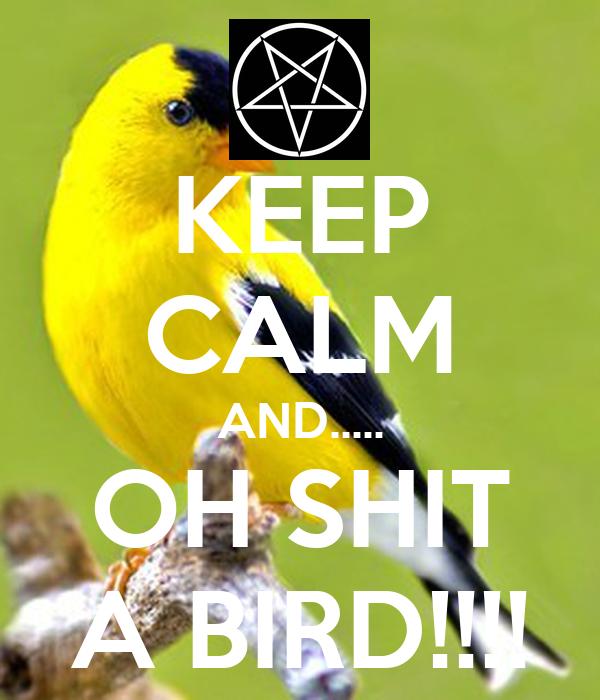 KEEP CALM AND..... OH SHIT A BIRD!!!!