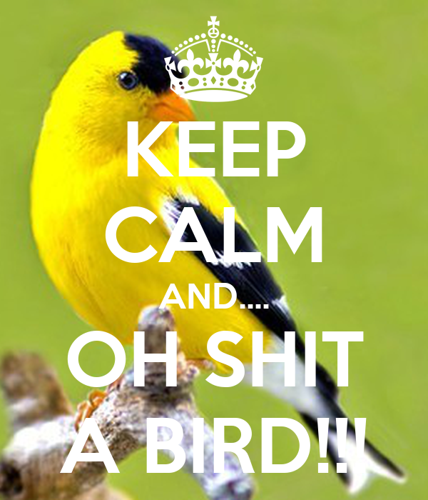 KEEP CALM AND.... OH SHIT A BIRD!!!