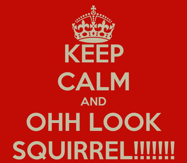 KEEP CALM AND OHH LOOK SQUIRREL!!!!!!!