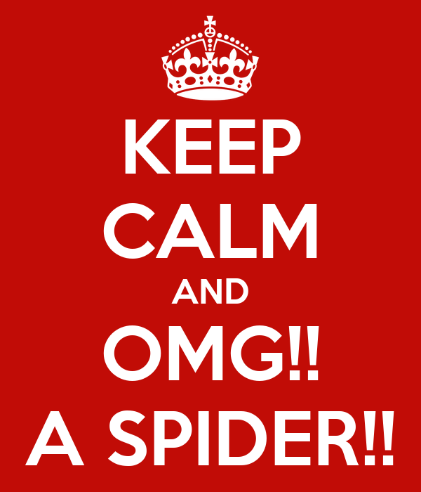 KEEP CALM AND OMG!! A SPIDER!!