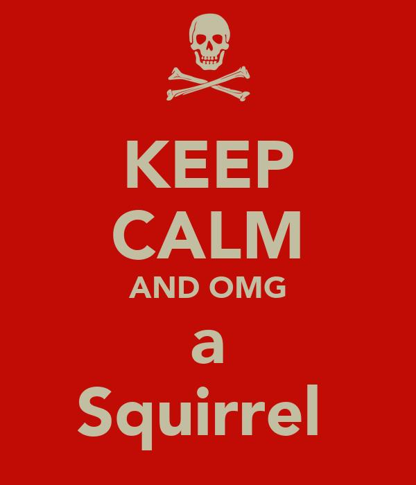 KEEP CALM AND OMG a Squirrel