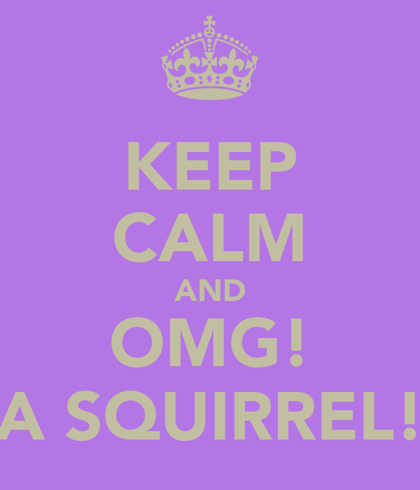 KEEP CALM AND OMG! A SQUIRREL!