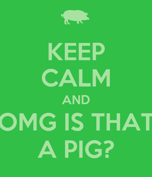 KEEP CALM AND OMG IS THAT A PIG?