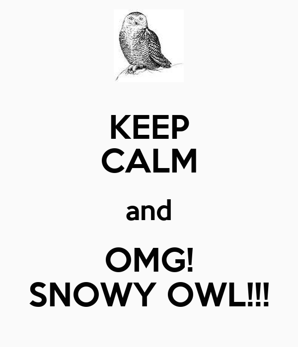 KEEP CALM and OMG! SNOWY OWL!!!