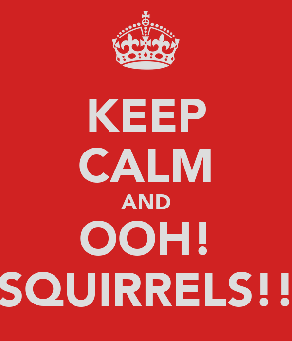KEEP CALM AND OOH! SQUIRRELS!!