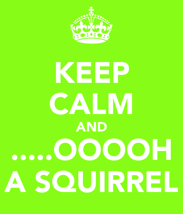 KEEP CALM AND .....OOOOH A SQUIRREL