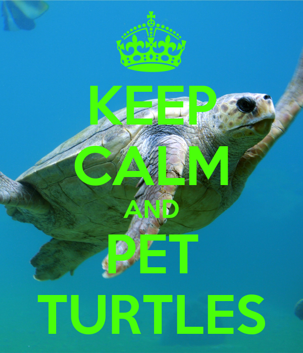 KEEP CALM AND PET TURTLES