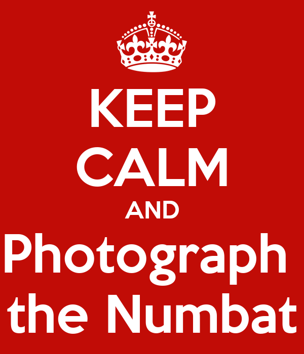 KEEP CALM AND Photograph  the Numbat