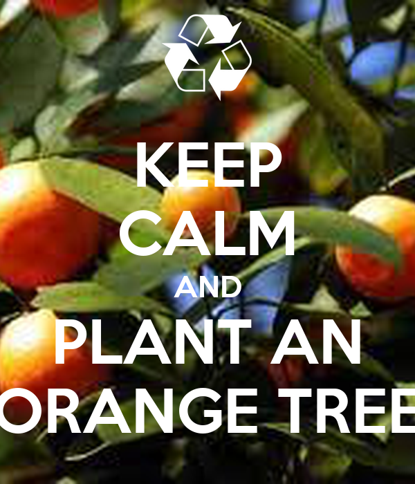 KEEP CALM AND PLANT AN ORANGE TREE