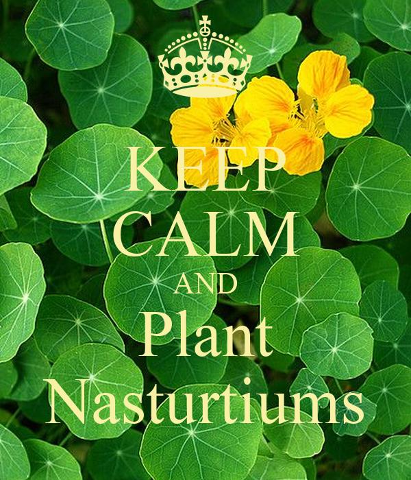 KEEP CALM AND Plant Nasturtiums
