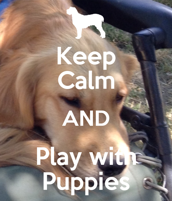Keep Calm AND Play with Puppies