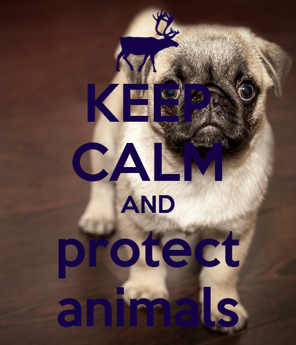 KEEP CALM AND protect animals