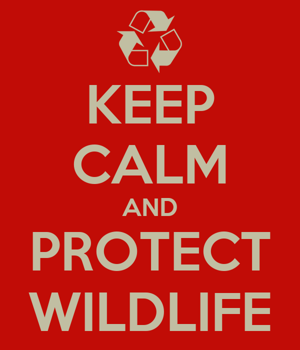 KEEP CALM AND PROTECT WILDLIFE