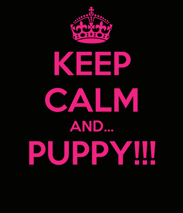 KEEP CALM AND... PUPPY!!!