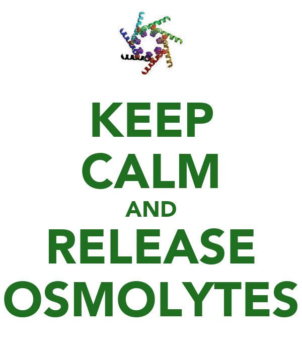 KEEP CALM AND RELEASE OSMOLYTES