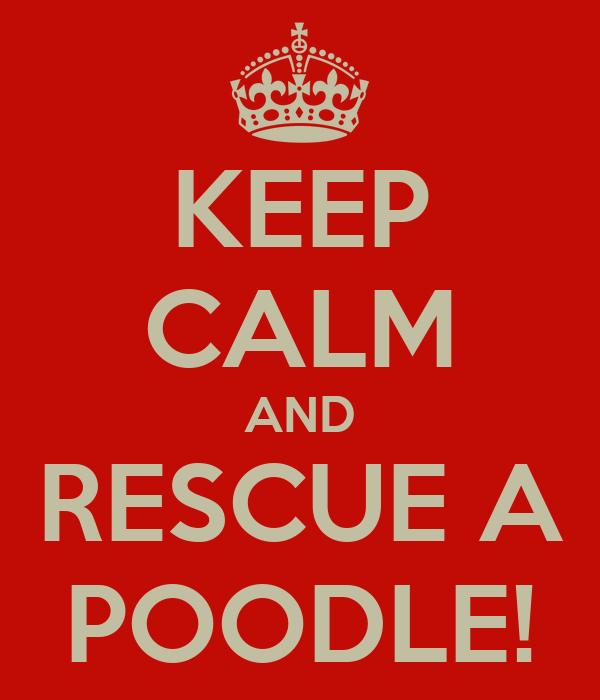KEEP CALM AND RESCUE A POODLE!