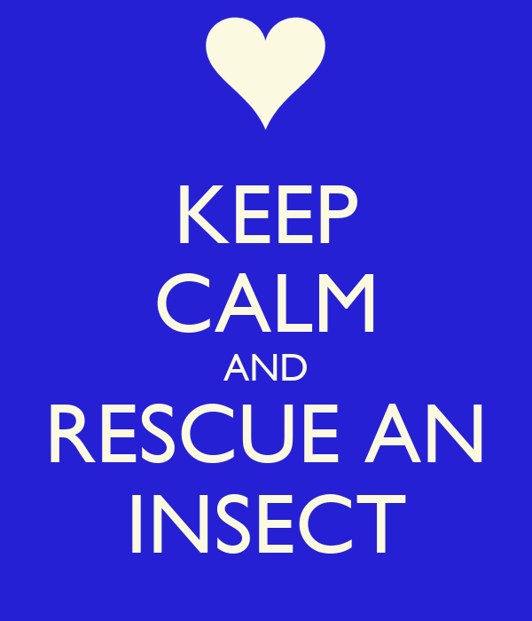 KEEP CALM AND RESCUE AN INSECT