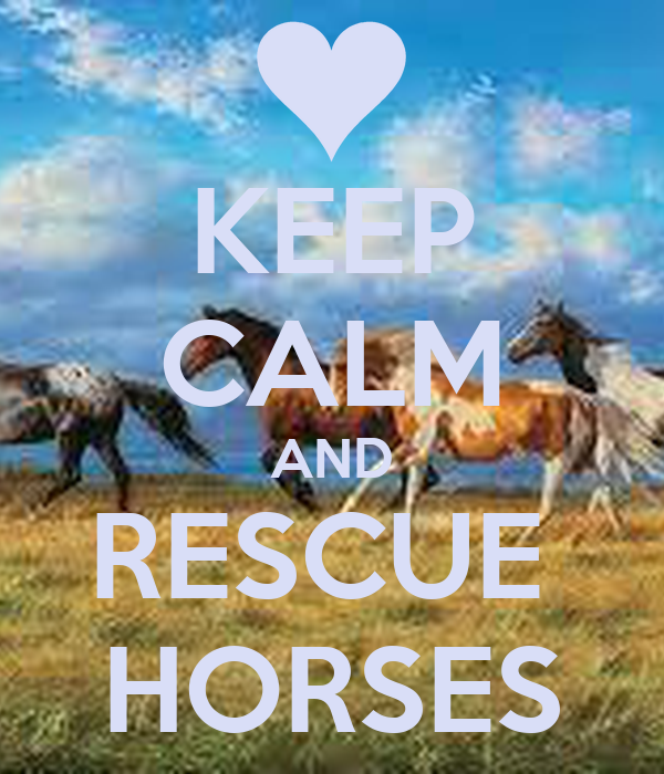 KEEP CALM AND RESCUE  HORSES