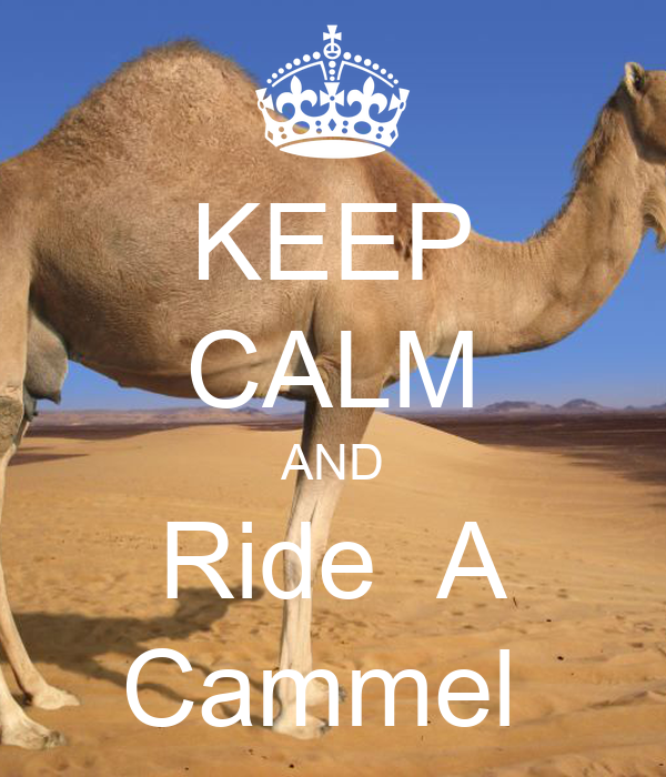 KEEP CALM AND Ride  A Cammel
