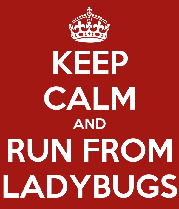 KEEP CALM AND RUN FROM LADYBUGS