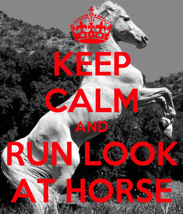 KEEP CALM AND RUN LOOK AT HORSE