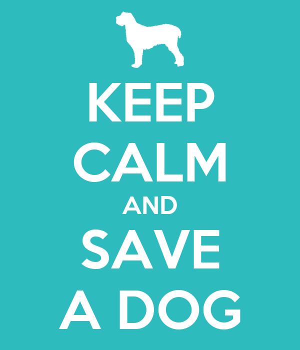 KEEP CALM AND SAVE A DOG