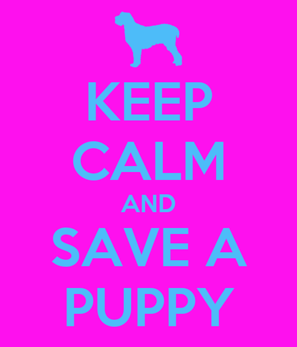 KEEP CALM AND SAVE A PUPPY
