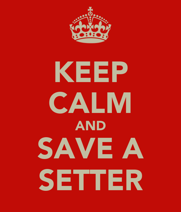 KEEP CALM AND SAVE A SETTER