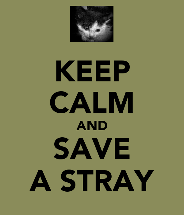 KEEP CALM AND SAVE A STRAY