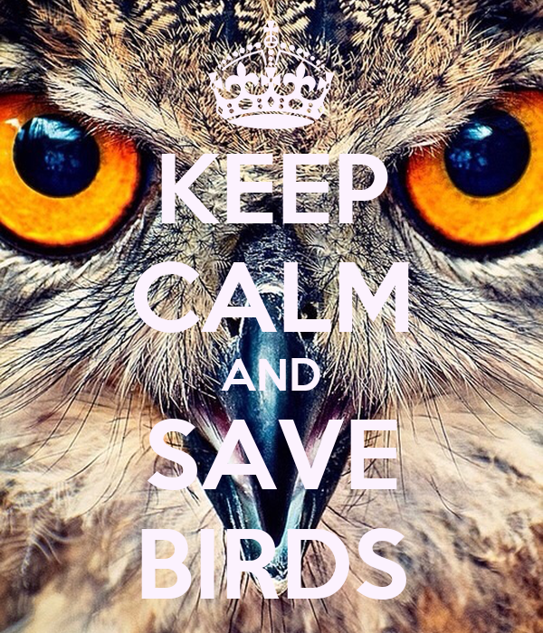 KEEP CALM AND SAVE BIRDS