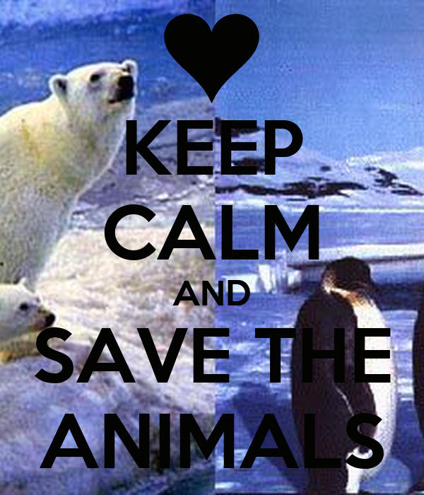 KEEP CALM AND SAVE THE ANIMALS
