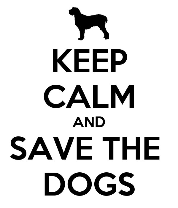 KEEP CALM AND SAVE THE  DOGS
