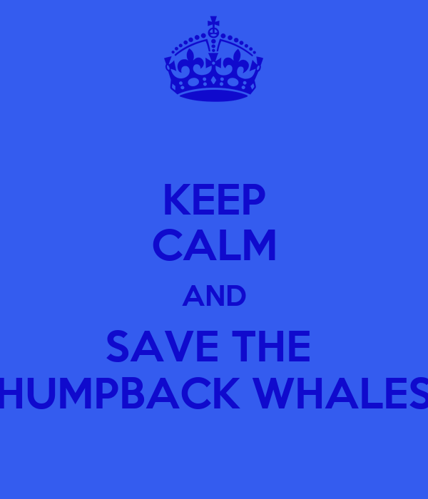 KEEP CALM AND SAVE THE  HUMPBACK WHALES