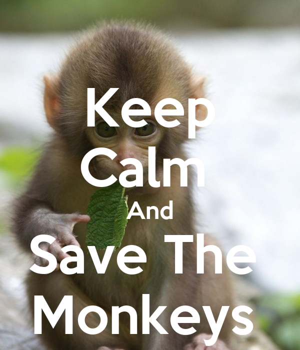 Keep Calm  And Save The  Monkeys