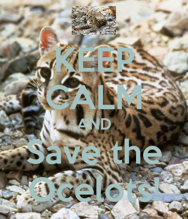 KEEP CALM AND Save the Ocelots!