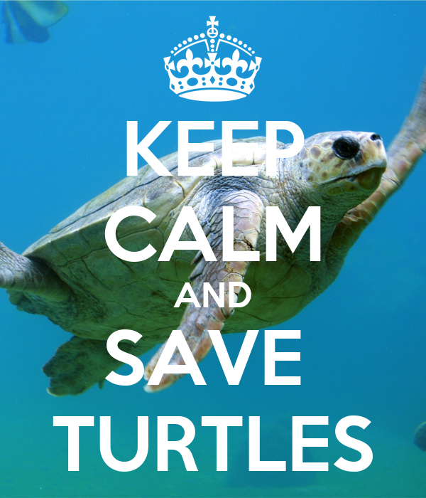 KEEP CALM AND SAVE  TURTLES