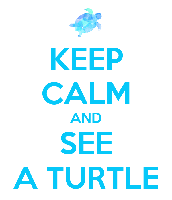 KEEP CALM AND SEE A TURTLE