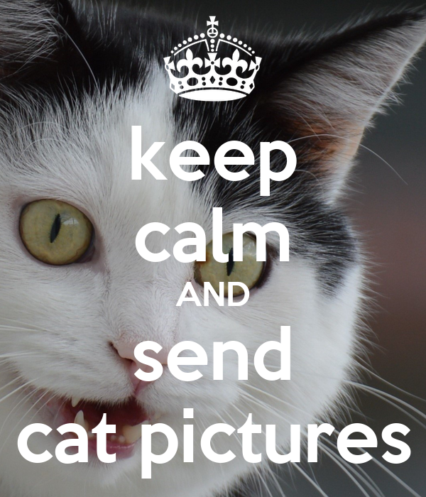keep calm AND send cat pictures